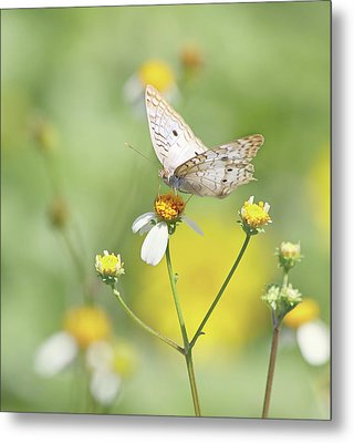 Butterfly On Wildflower Metal Print by Kim Hojnacki