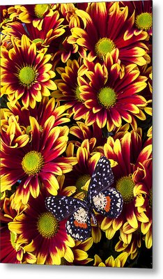 Butterfly On Yellow Red Daises  Metal Print by Garry Gay