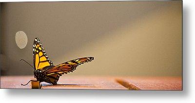 Butterfly Metal Print by Paul Robb