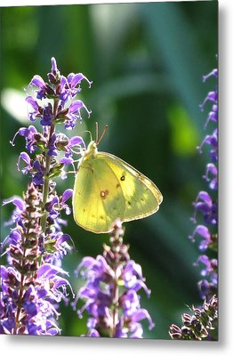 Metal Print featuring the photograph Butterfly by Rebecca Overton