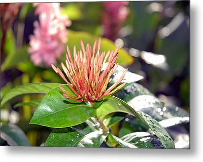Butterfly Snack Metal Print