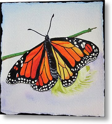 Butterfly Metal Print by Teresa Beyer