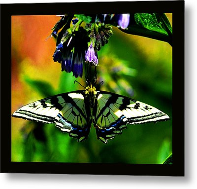 Metal Print featuring the photograph Butterfly Upside Down On Comfrey Flowers by Susanne Still