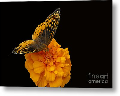 Metal Print featuring the photograph Butterfly Visitor by Cindy Manero