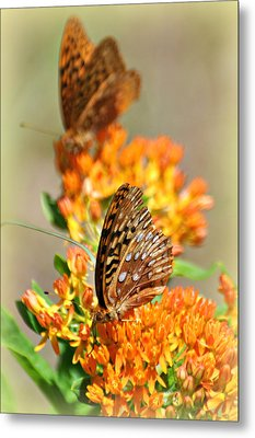 Butterfly Weed 2 Metal Print by Marty Koch