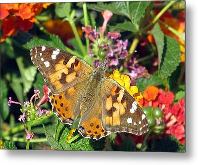 Buttery Fly Metal Print by Louise Mingua