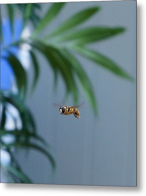 Buzz Of The Hover Fly Metal Print