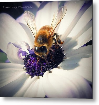 Buzz Wee Bees Lll Metal Print by Lessie Heape