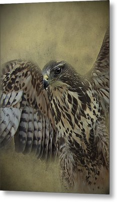 Metal Print featuring the photograph Buzzard Preparing To Fly by Ethiriel  Photography