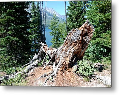 Metal Print featuring the photograph By Jenny Lake by Dany Lison
