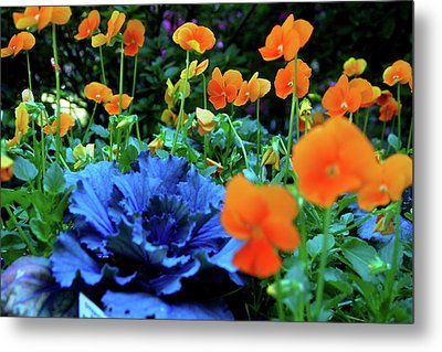 Cabbage And Viola's Metal Print by Laura  Grisham