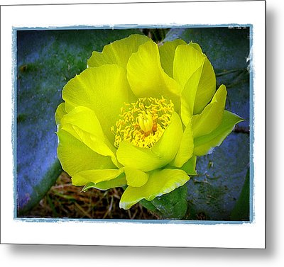 Metal Print featuring the photograph Cactus Flower by Judi Bagwell