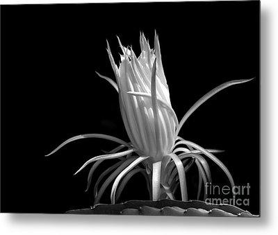 Cactus Flower Metal Print by Sabrina L Ryan
