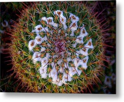 Cactus Radiance Metal Print by Vicki Pelham