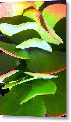 Cactus Wave Metal Print by Paul Washington