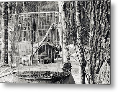 Caged Rabbit Metal Print by Floyd Smith