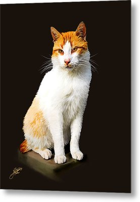Calico Metal Print by Tom Schmidt