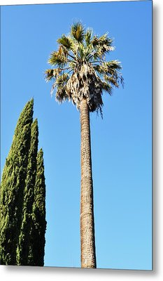 California Palm Metal Print by Todd Sherlock