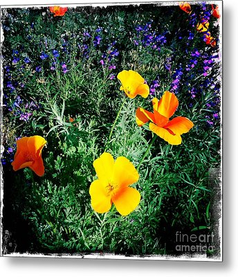 Metal Print featuring the photograph California Poppy by Nina Prommer
