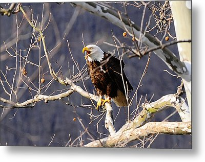 Metal Print featuring the photograph Calling For His Mate by Randall Branham