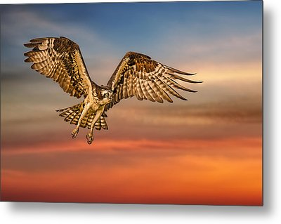 Calling It A Day Metal Print by Susan Candelario