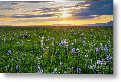 Camas Fields Metal Print by Idaho Scenic Images Linda Lantzy