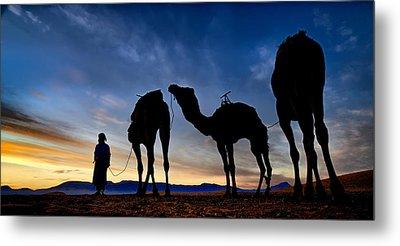 Camels  Metal Print by Okan YILMAZ