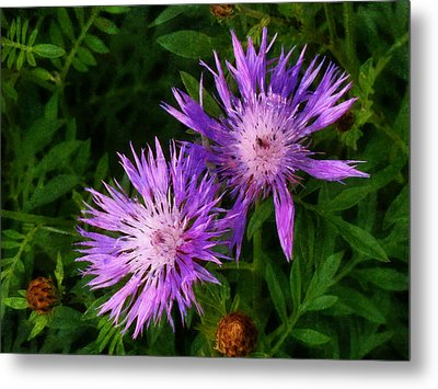 Metal Print featuring the photograph Can Flowers Say Boo by Steve Taylor