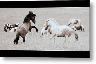 Metal Print featuring the photograph Can We Do This by Rima Biswas