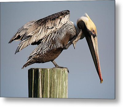 Can You Hear Me Now Metal Print by Paulette Thomas
