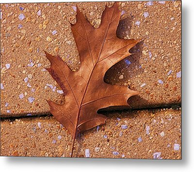 Can You See Me Now Metal Print