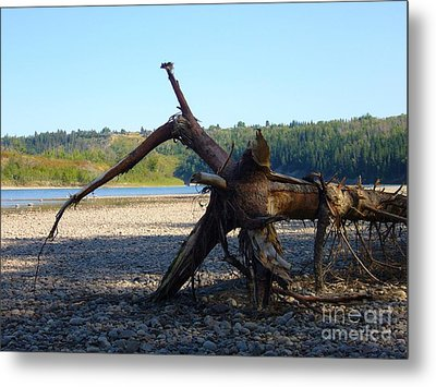 Metal Print featuring the photograph Canadian Driftwood by Jim Sauchyn