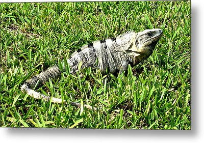 Metal Print featuring the photograph Cancun Eguana by Rob Green