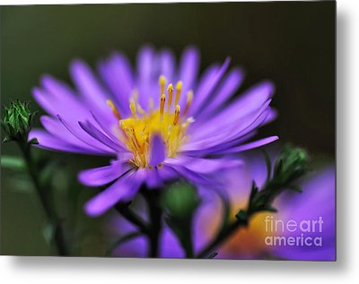 Candles On A Daisy Metal Print by Kaye Menner
