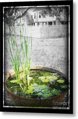 Metal Print featuring the photograph Cane Pot And Water Lily by Jeanne  Woods