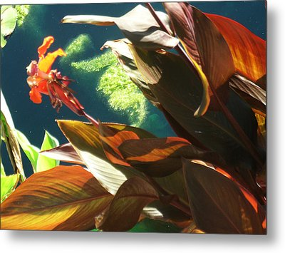 Canna Lily And Water In San Angelo Civic League Park Metal Print