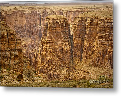 Canyons  Metal Print by James BO  Insogna