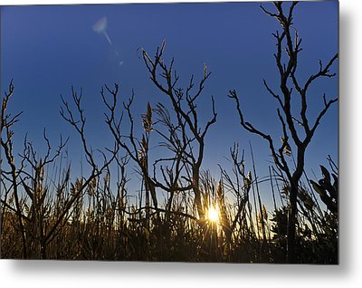 Cape Cod Marsh At Sunset Metal Print by Marianne Campolongo