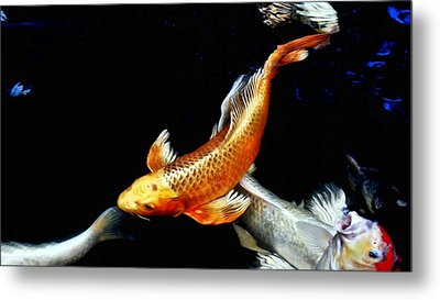 Captain Koi Metal Print by Don Mann