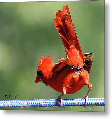 Cardinal-a Picture Is Worth A Thousand Words Metal Print