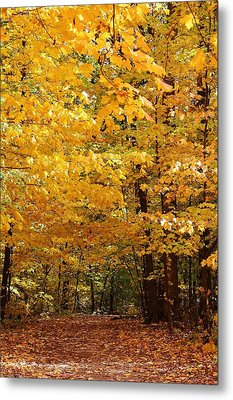 Carpet Of Leaves Marks The Path Metal Print by Bruce Bley