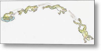 Cartoon Of Frog Sitting On Water Lily And Frogs Jumping Metal Print by Dorling Kindersley