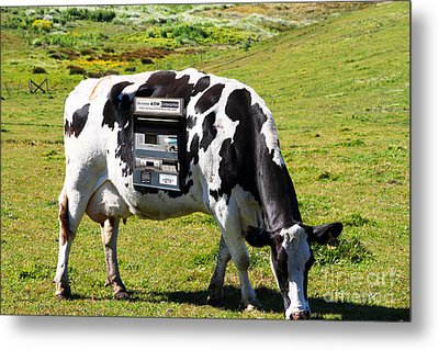Cash Cow . 7d16140 Metal Print by Wingsdomain Art and Photography