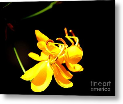 Cassia Blossom Metal Print by Theresa Willingham