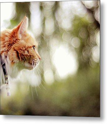 Cat And Bokeh Background Metal Print by Maria Kallin