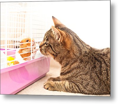 Cat And Hamster Metal Print