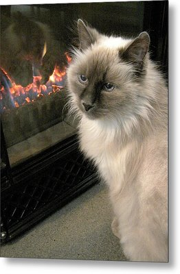 Cat And The Fireplace Metal Print by Patricia Drohan