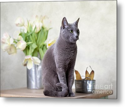 Cat And Tulips Metal Print by Nailia Schwarz