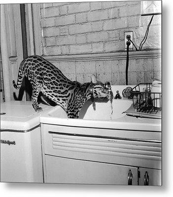 Cat At The Tap Metal Print by Sherman