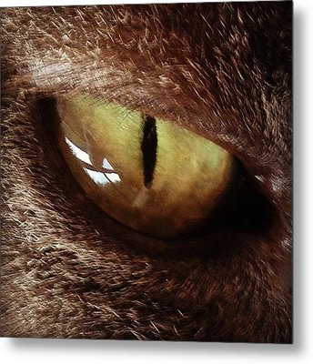 Cat Eye Metal Print